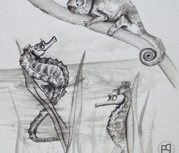 Illustration tradi